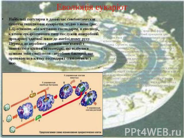 Еволюція еукаріот Найбільш популярна в даний час симбиотическая гіпотеза походження еукаріотів, згідно з якою (рис. 1.4) основою, або клітиною-господарем, в еволюції клітини еукаріотичного типу послужив анаеробний прокариот, здатний лише до амебоідн…