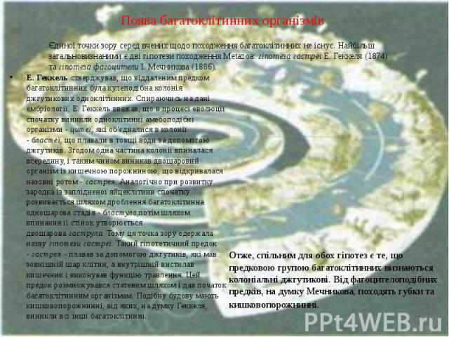 Поява багатоклітинних організмів Е. Геккельстверджував, що віддаленим предком багатоклітинних була кулеподібна колонія джгутикових одноклітинних. Спираючись на дані ембріології, Е. Геккель вважав, що в процесі еволюції спочатку виникли одноклі…