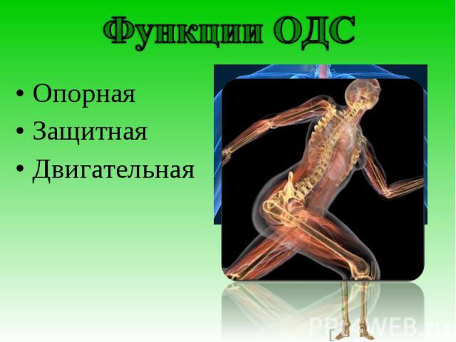 Функции ОДС Опорная Защитная Двигательная.