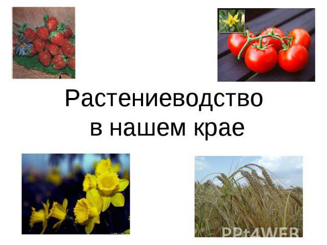 На растениеводство крае в тему презентацию нашем