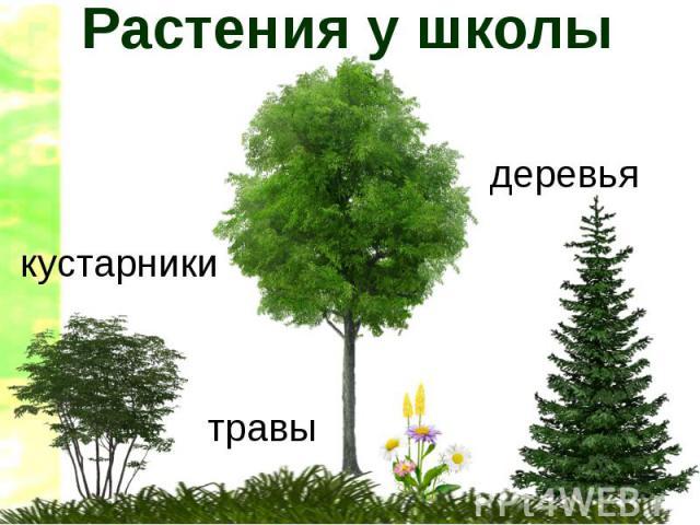 Презентация Деревья Для 2 Младшей Группы