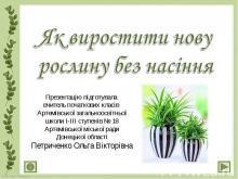 Розмноження рослин, 3 клас