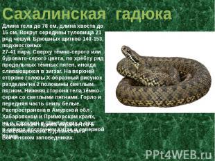Сахалинская гадюка длина тела до 78 см