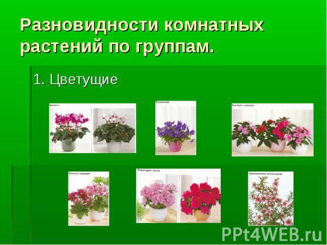 Презентация Комнатные Растения В Интерьере Жилого Дома