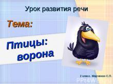 Птицы: ворона