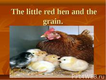 The little red hen and the grain