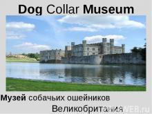 Dog Collar Museum