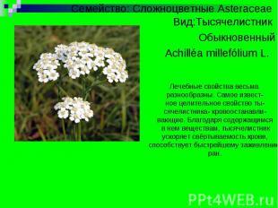Презентацию на тему лекарственное растение