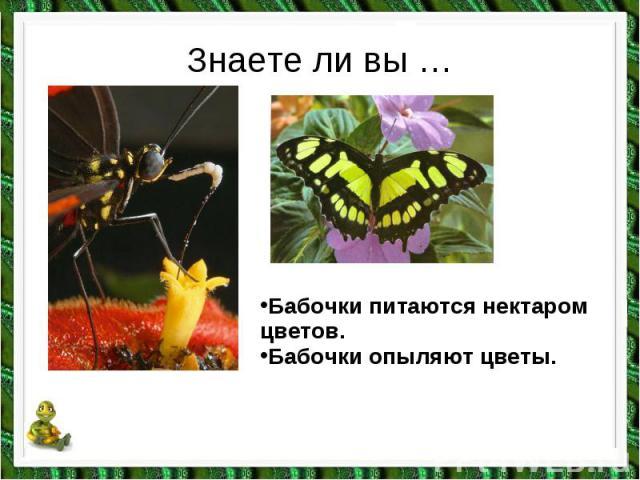 почему нельзя рвать цветы и ловить бабочек детские презентации