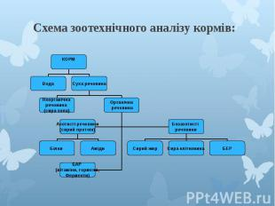 Схема зоотехнічного аналізу кормів: