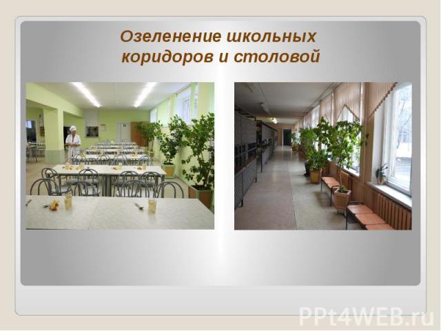 Озеленение школьных коридоров и столовой