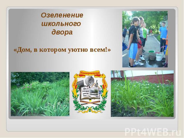 Озеленение школьного двора «Дом, в котором уютно всем!»