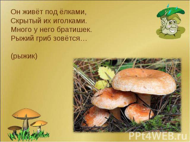 рыжий гриб фото