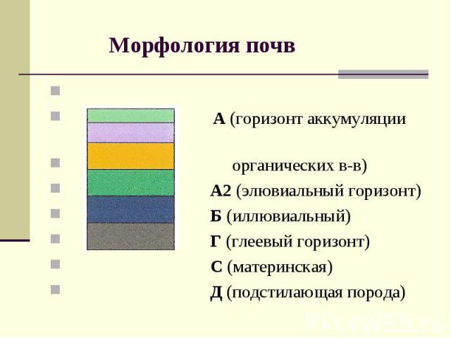 Морфология почв А (горизонт