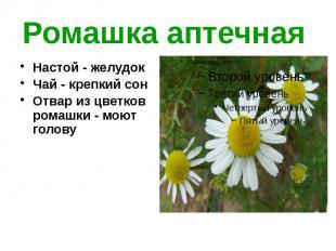 Ромашка аптечная Настой - желудок Чай - крепкий сон Отвар из цветков ромашки...