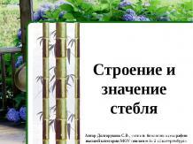 Строение и значение стебля