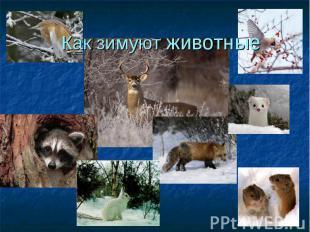 Презентация на тему как зимуют