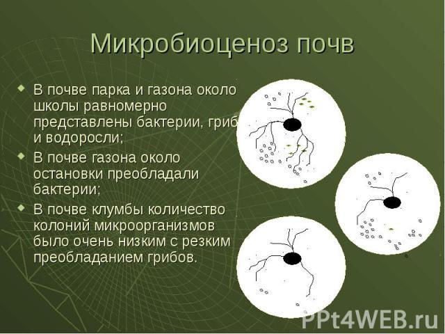 mikrobiologicheskoe-issledovanie-vlagalisha