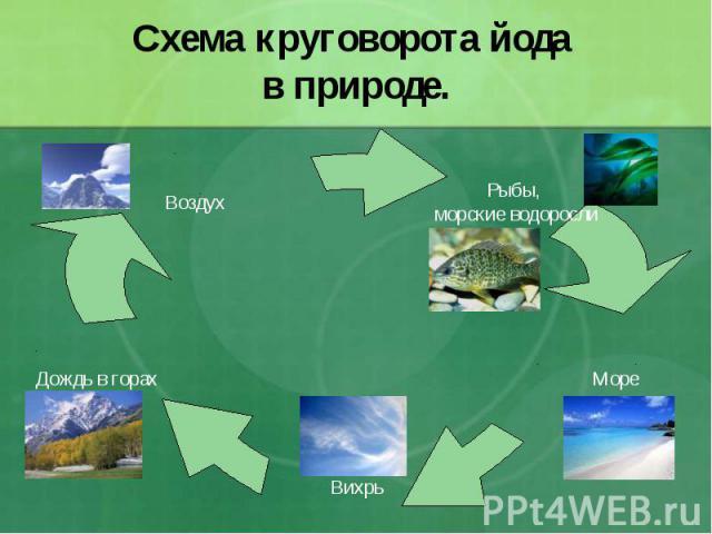 Схема круговорота йода в