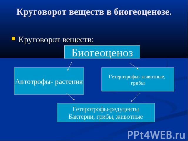 Круговорот веществ в биогеоценозе. Круговорот веществ:
