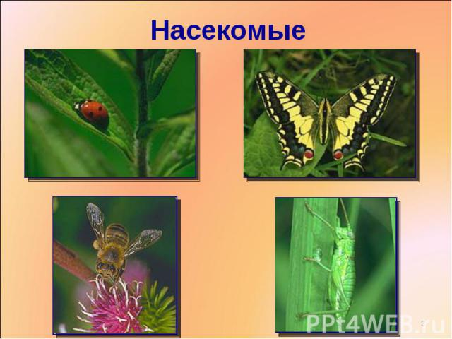 презентация 2 класс какие бывают животные