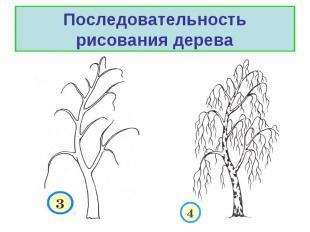 Последовательность рисования дерева.
