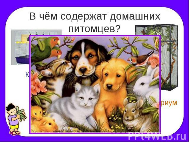 презентация 2 класс про кошек и собак