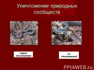 Уничтожение природных сообществ Гадюка обыкновенная Уж обыкновенный