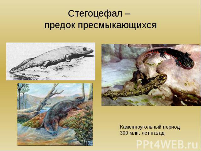 Разнообразие древних пресмыкающихся Происхождение