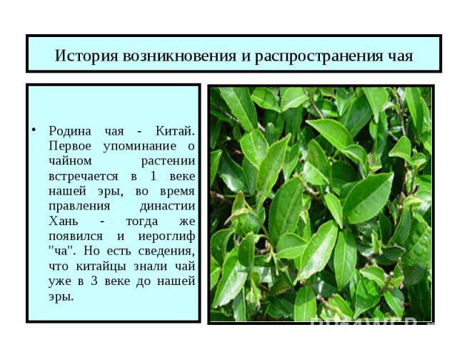 Фото чайные листья