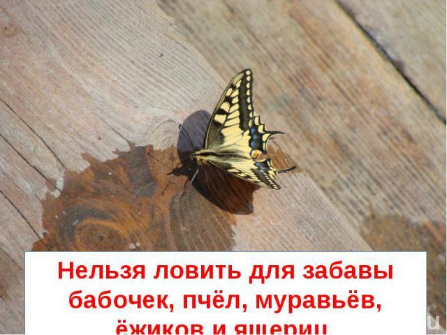нельзя ловить бабочек и стрекоз