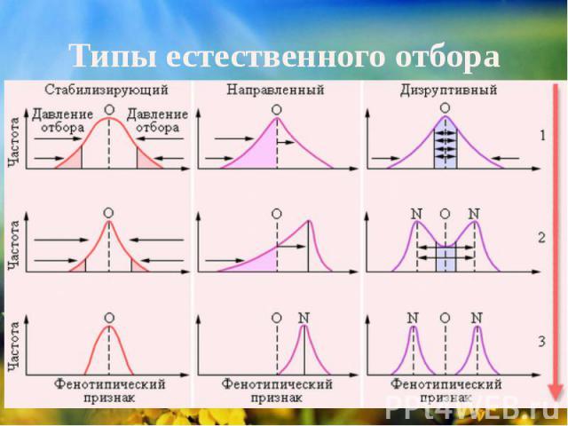 типы естественного отбора таблица