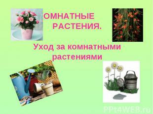 Шаблоны для презентации по комнатным растениям