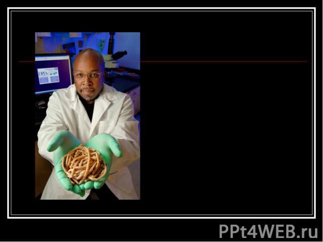 плоские черви паразиты человека сосальщики