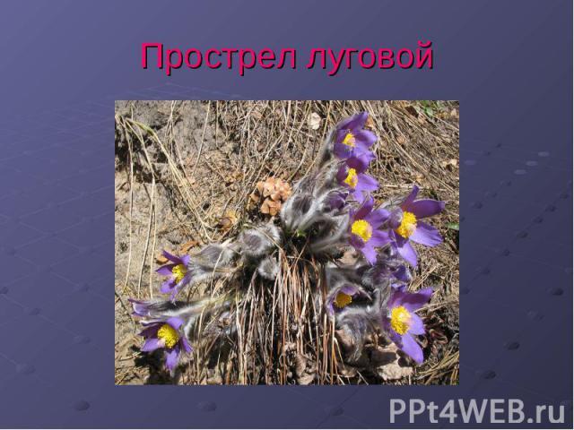 знакомство с растениями которые занесены в красную книгу на