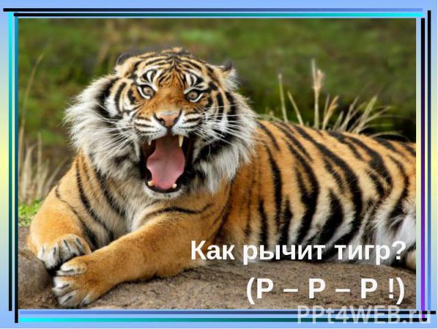 Как рычит тигр? (Р – Р – Р !)
