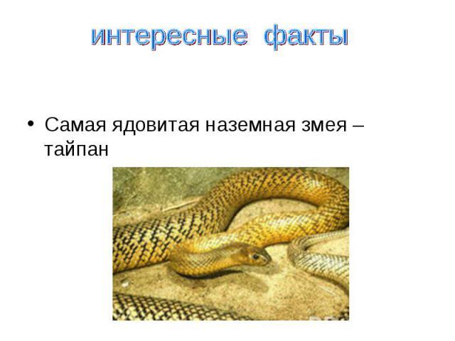 Самая ядовитая наземная змея тайпан