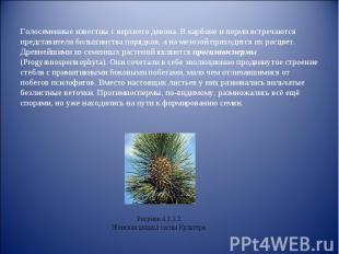 презентация знакомство с внешним строением побегов растения