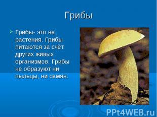 Грибы Грибы- это не растения. Грибы питаются за счёт других живых организмов. Гр