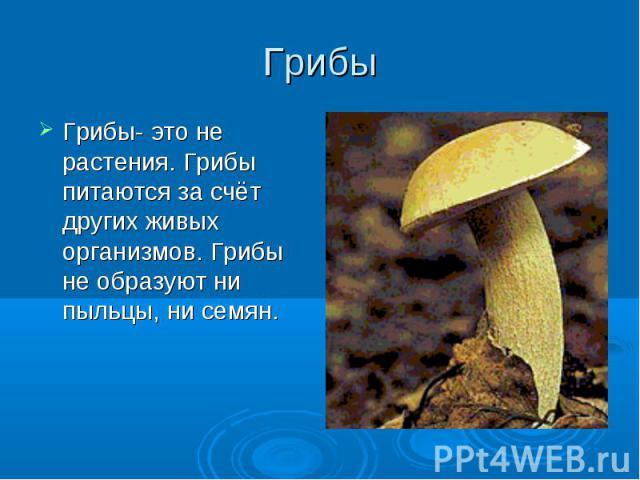 Грибы Грибы- это не растения. Грибы питаются за счёт других живых организмов. Грибы не образуют ни пыльцы, ни семян.