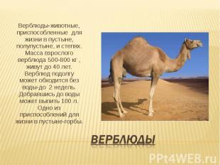 Скачать презентация на тему пустыня