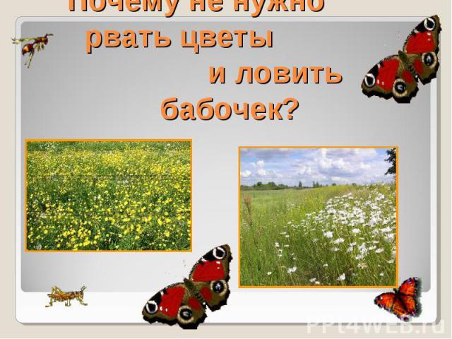 почему в лесу нужно соблюдать тишину и нельзя рвать цветы и ловить бабочек