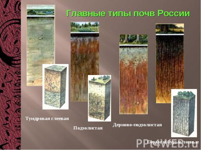 Главные типы почв России