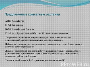 Предлагаемые комнатные растенияА) №1 Хлорофитум Б) №1 Нефролепис В) №1 Хлорофиту