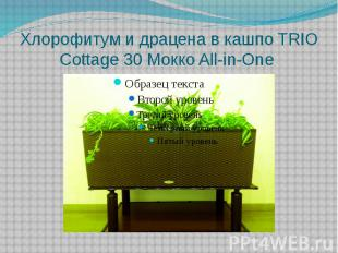 Хлорофитум и драцена в кашпо TRIO Cottage 30 Mокко All-in-One