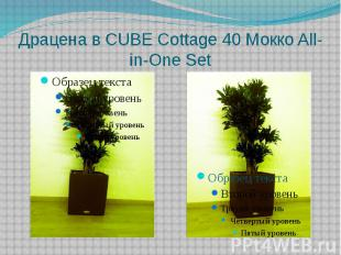 Драцена в CUBE Cottage 40 Mокко All-in-One Set