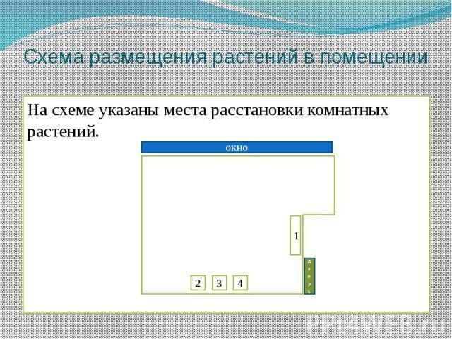 Схема размещения растений в помещенииНа схеме указаны места расстановки комнатных растений.