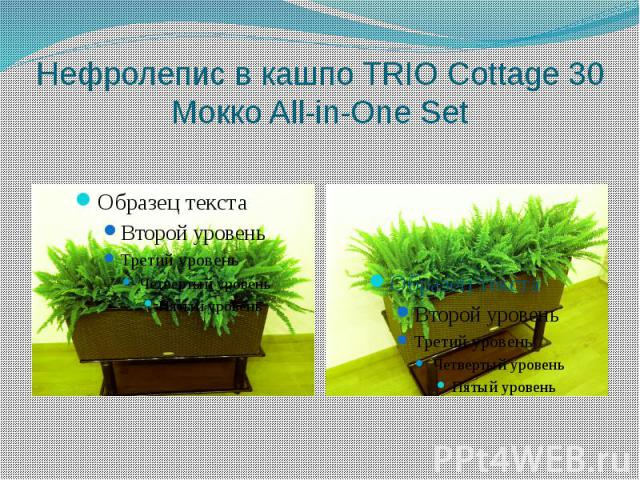 Нефролепис в кашпо TRIO Cottage 30 Mокко All-in-One Set