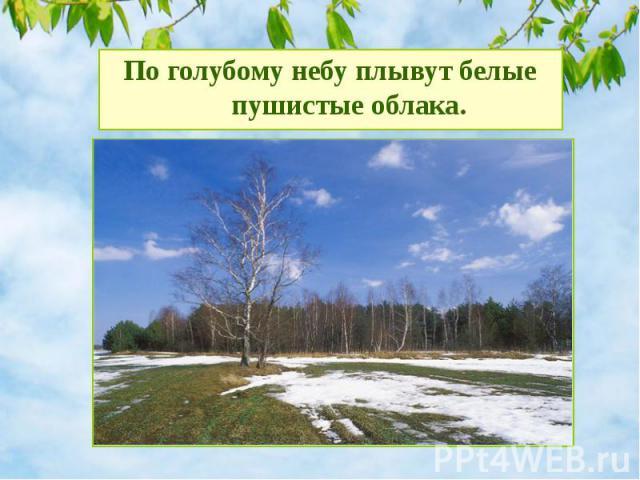 По голубому небу плывут белые пушистые облака.