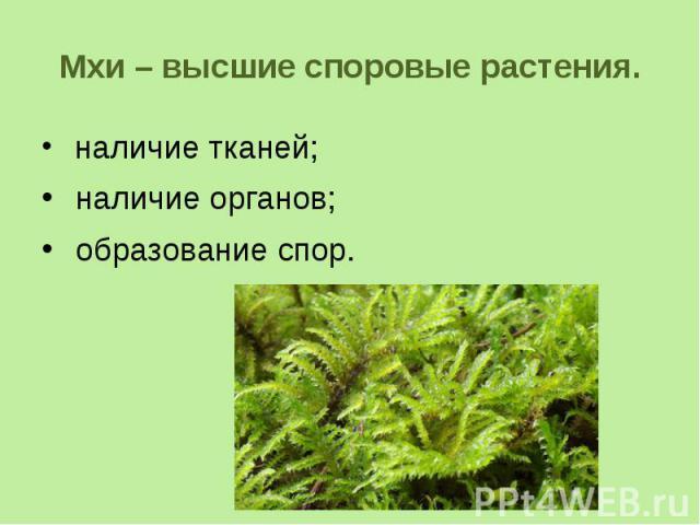 Мхи почему относятся к высшим растениям